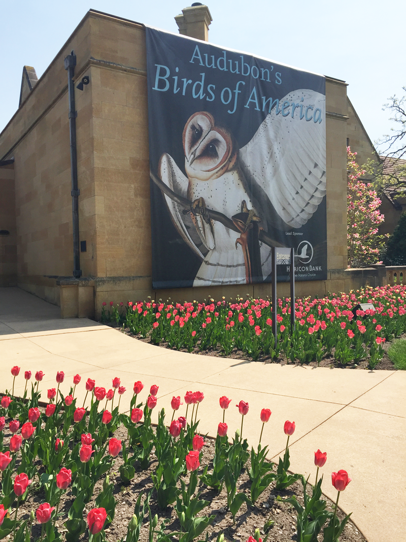 Paine Art Center & Gardens Audubon's Birds of America exhibit 2016