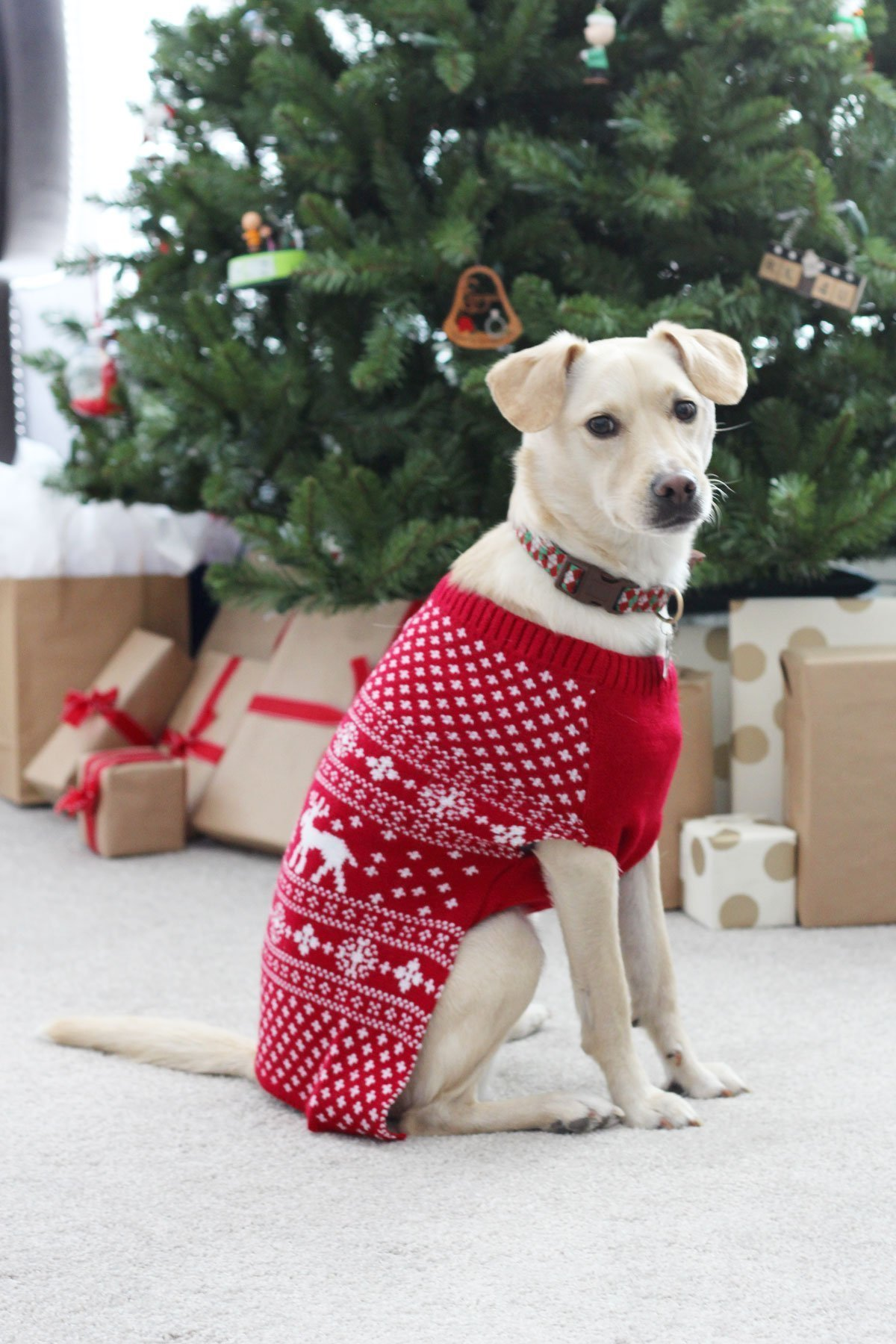 Red fair aisle dog sweater