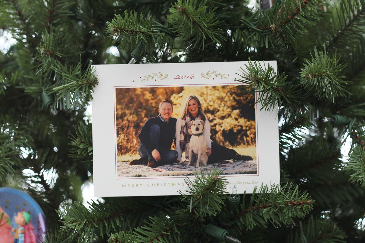 2016 Christmas card with dog