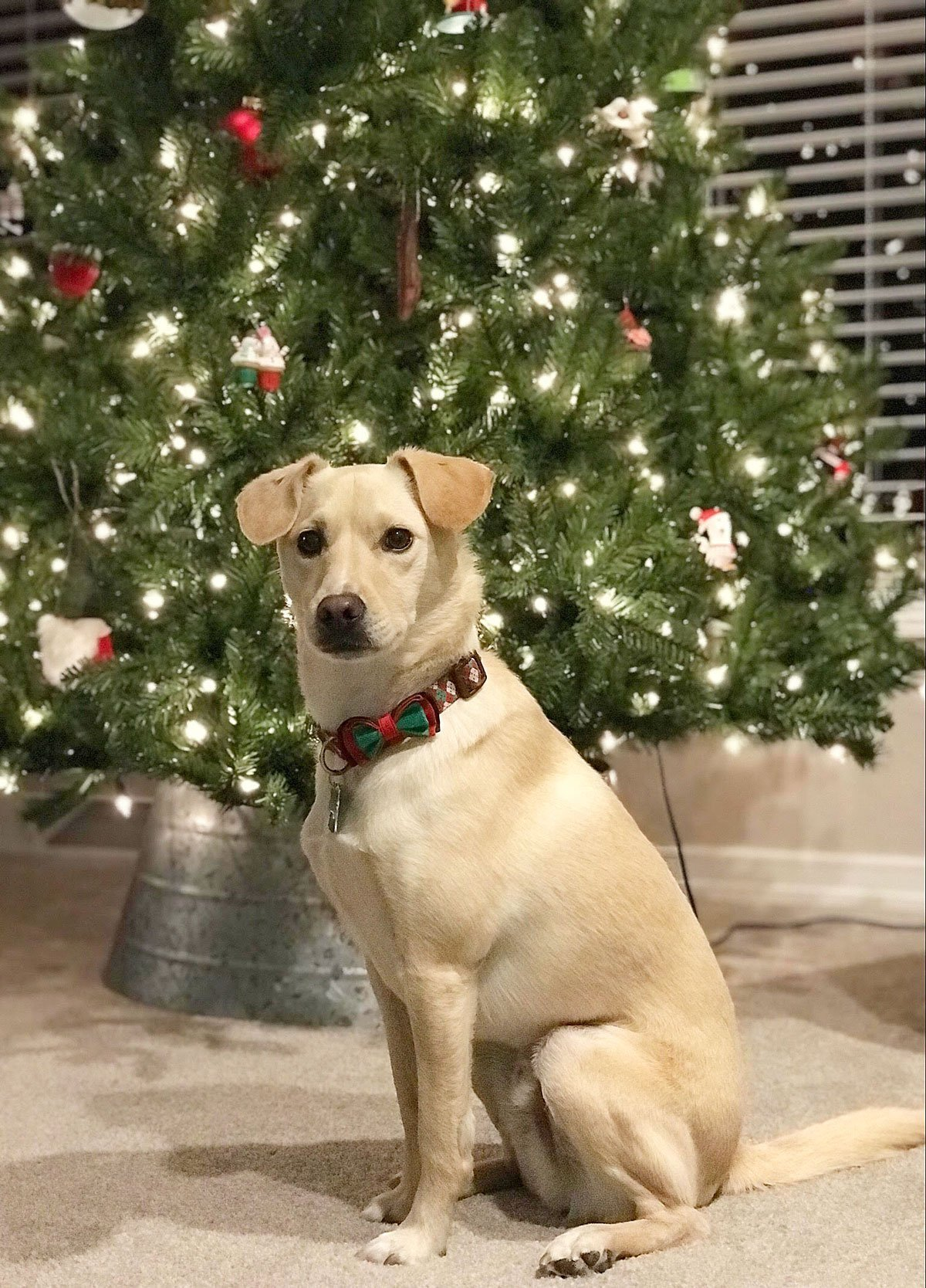 dog in front of tree
